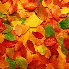 cute fall wallpaper backgrounds new ipad wallpapers group 86