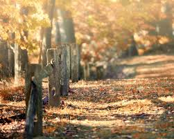 autumn decor fall decor autumn landscape photograph fall