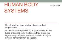 Bill Nye Digestion Worksheet Human Body Systems