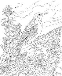 scenic coloring pages coloring pages animal beautiful flower