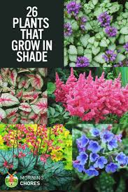 best 25 shade perennials ideas on pinterest shade plants shade