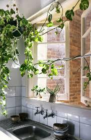 47 best urban garden images on pinterest plants gardening and