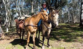 Where the wild horses are   Australian Geographic Australian Geographic Brumbies