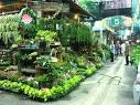 ช้อปปิ้งตลาดนัดธนบุรี มีดีที่ต้นไม้ - Travel - Manager Online