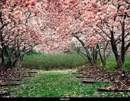 فصل الربيع Images?q=tbn:ANd9GcTpufnjUPWuNg_YAsOtyevZ8brbP5HTDUw4GDZetQkKT3Brkort4bm2zJGX6Q