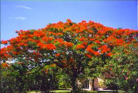 الزهور ونباتات الزينة, Images?q=tbn:ANd9GcTpxssQzNu74C3YiaKeho5rHlNGEg5BIzenqbZgN9axMOeN91-Kxw