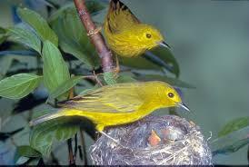 عصافير images?q=tbn:ANd9GcT