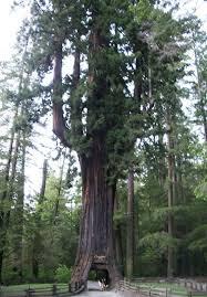 [Super Xịn] Bạn thuộc loại cây gì và bạn là người thế nào? Images?q=tbn:ANd9GcTsbgZuyr0TWGe95HcC5PI9mc-ak28N-uCiUmlYeeM6TX6hdAmp