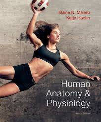 Anatomy And Physiology Chapter 1 Review Answers Human Anatomy U0026 Physiology 9th Edition Chapter 1 The Human