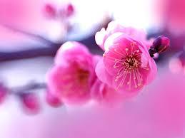 வால்பேப்பர்கள் ( flowers wallpapers ) 01 - Page 4 Images?q=tbn:ANd9GcTsp3tTkBpdiDJJBahym2a6kiBfiZzYFKGn4OJ1Zv0S2exVU6-PcQ