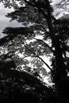 Habitat : a.t.Bukit Brown. Heritage. Habitat. History.