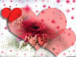 வால்பேப்பர்கள் ( flowers wallpapers ) - Page 3 Images?q=tbn:ANd9GcTv51Kz2KEmz7Ro92YNlfqq11nNHqBxlkJt21ypLtYECK6VTKaLeQ