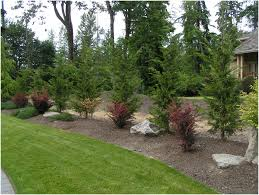 backyards charming leyland cypress landscape ideas placed as a