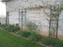 another way to use an old gazebo frame to make two trellises one