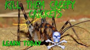 kill them creepy basement crickets now youtube
