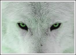 ~Rocky's Wolf Fursona~ Images?q=tbn:ANd9GcTx-Q9Aei1aGaBnMtwr8Z-mjoJA56cL9Iby8L-wcM3XDxwwXT3F&t=1