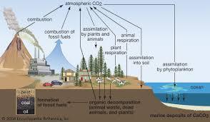 carbon  C    chemical element   Britannica com Encyclopedia Britannica The generalized carbon cycle