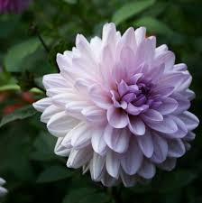 Las flores que nos gustan. Images?q=tbn:ANd9GcTyEEDGpnrNO4ingRbLIY7AM2ghrUv2JW9xM6DRP2vXtMYmdAZWKQ