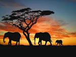30.000 <b>elefantes</b> y unos
