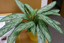 4 best indoor plants for apartments that purify air and beat the blahs