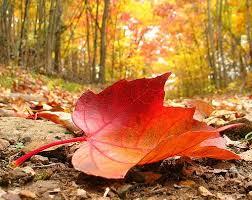 برگ ریزان پاییزی