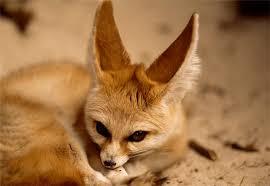 إليكم صور الحيوان الدي تشتهر به الجزائر وهو رمز لها 1e996d4961