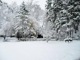 منظره پارک و درختان در زمستان