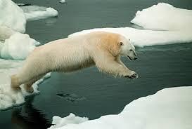 external image polar-bear-in-arctic.jpg&t=1