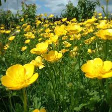 http://t3.gstatic.com/images?q=tbn:G6WrYpJCKjYJsM:http://images.doctissimo.fr/photo/hd/1174341117/private-category/buttercup-1206164273.jpg