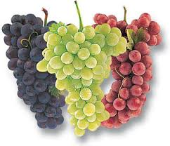 http://t3.gstatic.com/images?q=tbn:HPbTNy8_39s-JM:http://www.healthandadvices.com/healthfacts/wp-content/uploads/2008/12/grapes-health.jpg