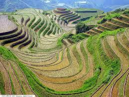 http://t3.gstatic.com/images?q=tbn:JYoXMh3dM2odDM:http://www.aljremh.com/photos/data/media/14/Nature_aljremh_com_photos%2520(55).jpg