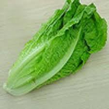 الخضروات lettuce.jpg