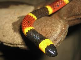 external image snake021.jpg
