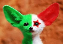 إليكم صور الحيوان الدي تشتهر به الجزائر وهو رمز لها 25359171851