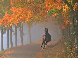 Wallpapers Backgrounds - Brown Horse Galloping Autumn Colors Wallpaper 1600x1200