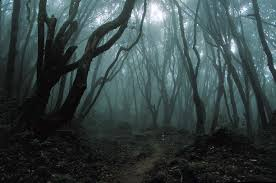 http://t3.gstatic.com/images?q=tbn:NnBz_x8Im7HANM:http://i9.photobucket.com/albums/a90/SamheinWarlock/SpookyForest.jpg&t=1