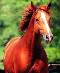 استرس در اسب ورزشی