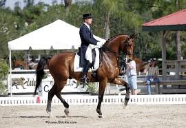Dressage: Dressage takes place