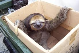 Sloth � Just Chillin