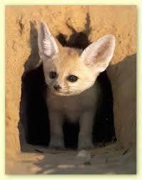 إليكم صور الحيوان الدي تشتهر به الجزائر وهو رمز لها Attachment