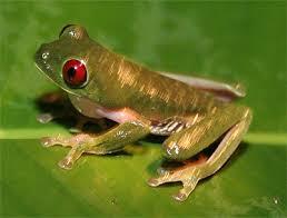 ضفاضع رووووعه بس سامه Frog2