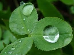 عکس قطره باران روی برگ