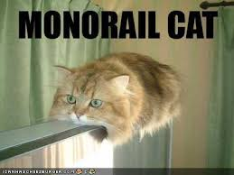 Post your Warrior! Funny-pictures-monorail-cat
