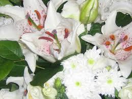 هدية لكل عضو Bouquet-de-fleurs-blanches