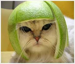 Make me Laugh. Funny-cat