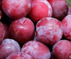 From pickyourown.org.  My camera isnt back from the doctor yet.  But our plums did look a lot like these.