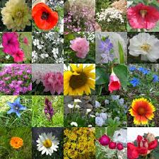 هدية لكل عضو Histoire_des_fleurs