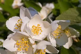 Кои са ви любимите цветя? - Page 2 2210446208_036a21d685