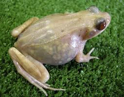 transparent frog picture