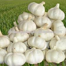 http://t3.gstatic.com/images?q=tbn:cI9fQ2LKb_Uj8M:http://www.asia.ru/images/target/photo/50578430/Garlic__Pure_White_